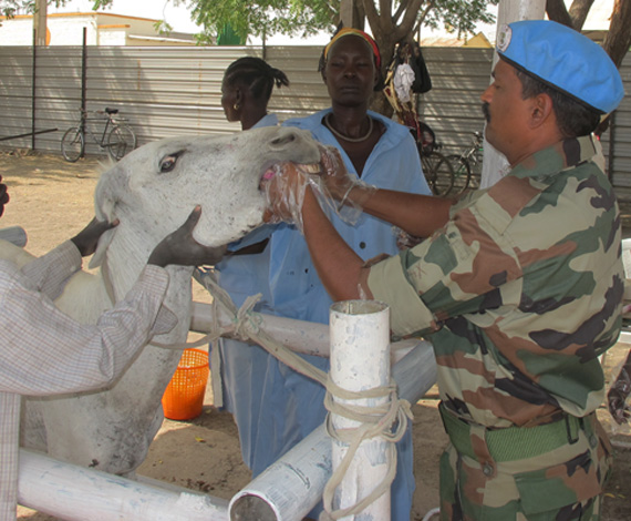Indian battalion holds free vet clinic in Malakal | UNMISS