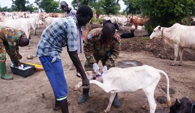 Ghanaian peacekeepers support cattle keeping communities in Unity