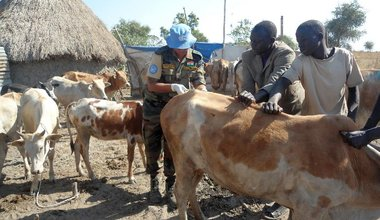 Indian peacekeepers provide desperately needed veterinarian support to Wau Shilluk cattle keepers