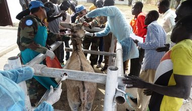 unmiss south sudan malakal veterinary livestock animal health training