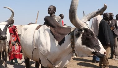 unmiss south sudan lakes intercommunal fighting cattle raiding revenge attacks grazing land water conflict prevention
