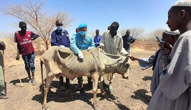 UNMISS protection of civilians free veterinary camp peacekeepers South Sudan peacekeeping cattle livestock India Renk Upper Nile