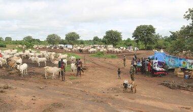 unmiss south sudan western bahr el ghazal state bangladesh mobile veterinary clinic