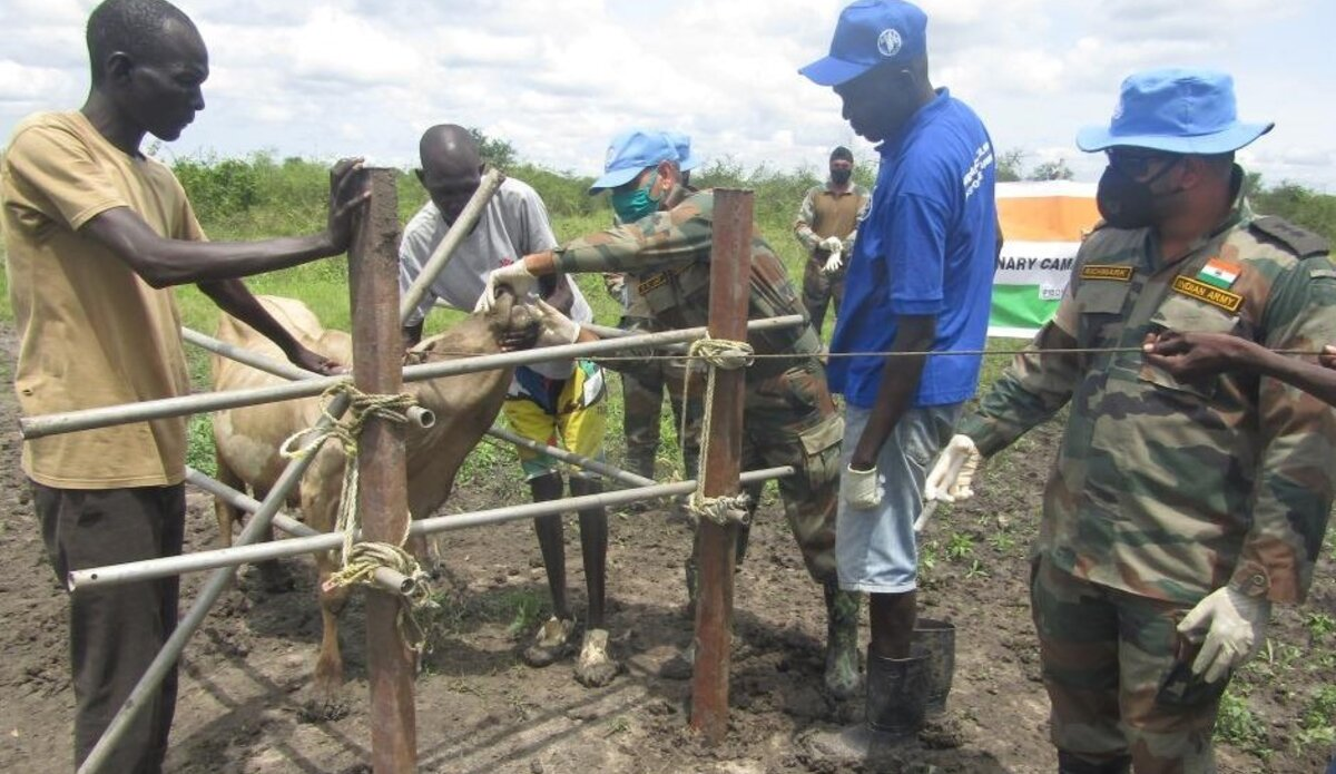 unmiss south sudan pibor india peacekeepers veterinaries clinic cattle livestock capacity building protection of civilians