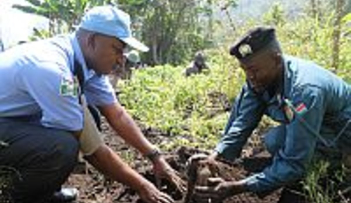 UNPOL, local residents harvest yam from demo farm in Katire