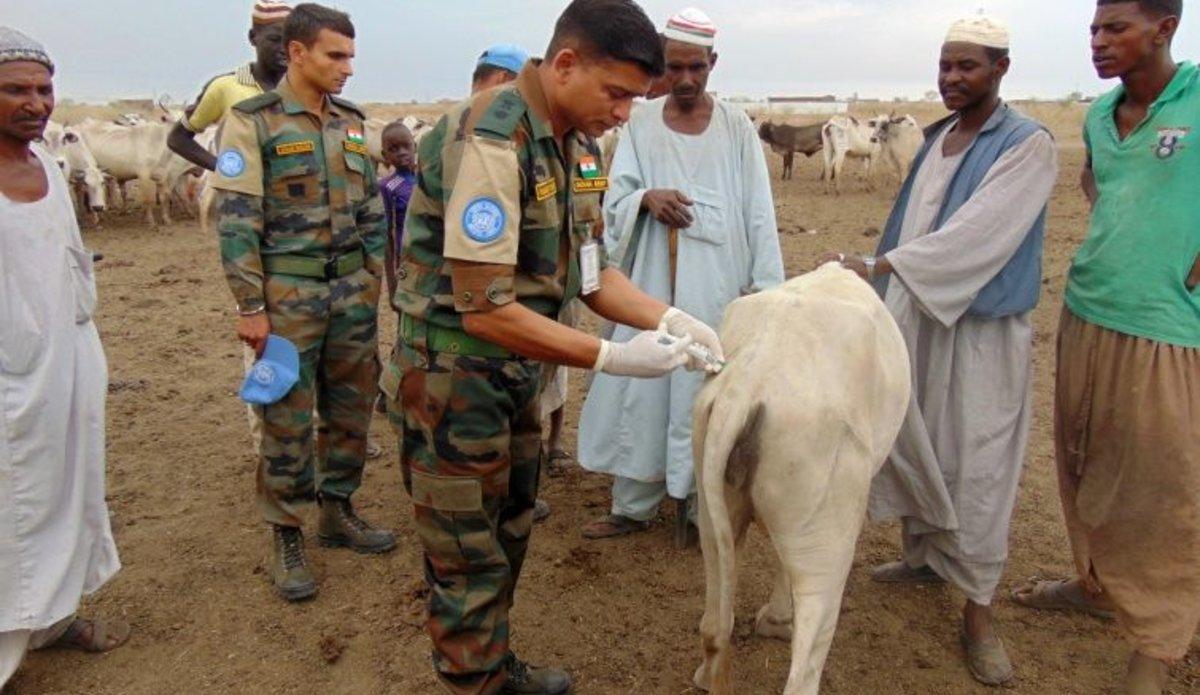 INDBATT-I administers veterinary care for livestock in Renk