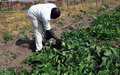 COVID-19 preventive measures in South Sudan affect farmers in Aweil
