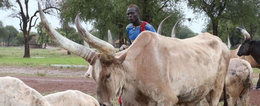 unmiss rup pakam lakes rumbek cattle raiding inter-communal conflicts peace agreement unmiss intervention
