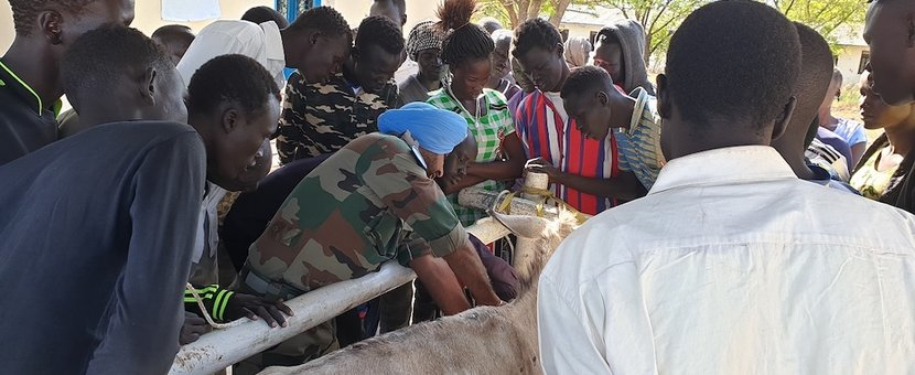 unmiss south sudan malakal india peacekeepers veterinary services capacity building